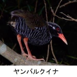 祝 決定 世界自然遺産「奄美大島、徳之島、沖縄島北部及び西表島」 一方課題の指摘も