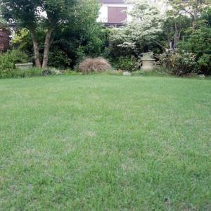 庭の芝の刈りクズを除去して目土を補う@鎌倉七里ガ浜