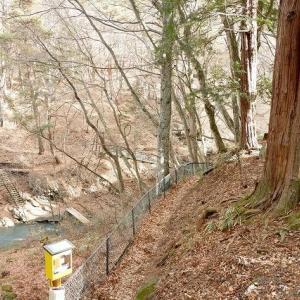 おこもり@八ヶ岳西麓原村(5) 凍りつく多留姫溪谷をドガティ君と歩こう
