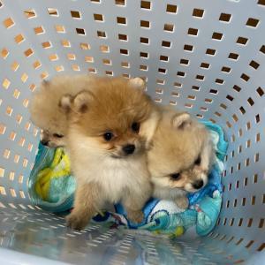 洗濯かごタクシー♪♪゚.+:。ヾ(o・ω・)ノ゚.+:。