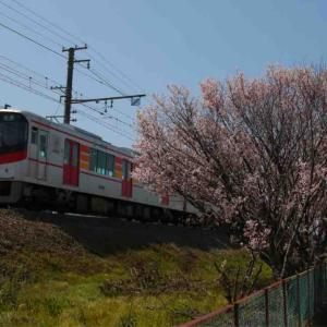 さくらサクサク🌸山陽沿線の桜の記録7