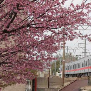 さくらサクサク🌸山陽沿線の桜の記録8