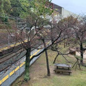 さくらサクサク🌸山陽沿線の桜の記録10