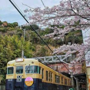 さくらサクサク🌸山陽沿線の桜の記録12(必要な外出)