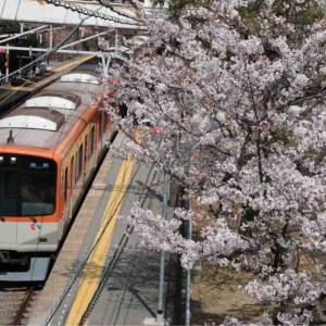さくらサクサク🌸山陽沿線の桜の記録17