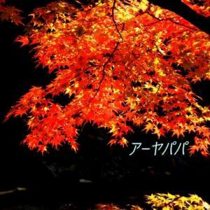 今年は紅葉が綺麗