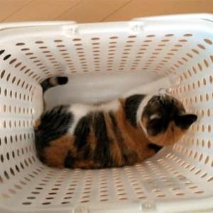 洗濯もんさん