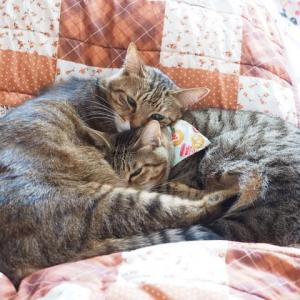 猫にとって、寝る位置は重要なのか、そうでないのか…