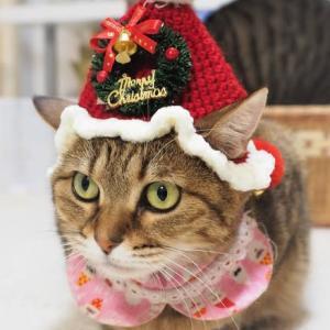 可愛いクリスマスの帽子とマントです(苺編)