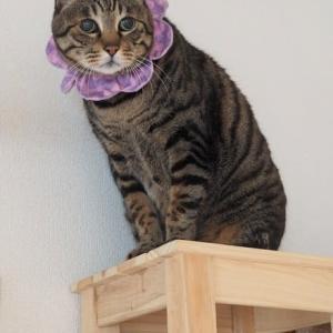 猫のためなら何でも出来ちゃう♪