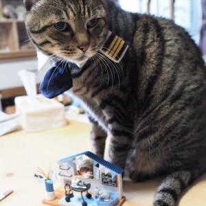 小さな小さな猫カフェです