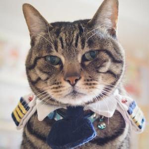 猫の嫌いな香りって?