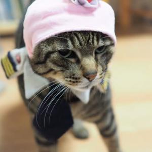 猫の好きな香りもそれぞれ、かな♪
