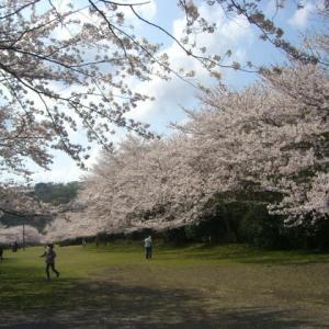 ☆咲いた・咲いた 桜が咲いた・・・・☆