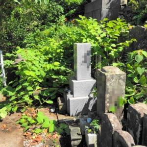 墓地の雑草