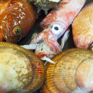 京丹後産イカの美味しい季節です!