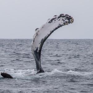 クジラくじら鯨真っ盛り