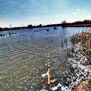 野池でのべ竿での鯉釣り