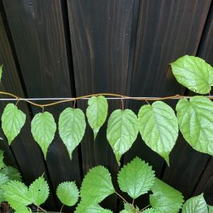 ■植物と葉 みんなちがって・・・・/ Plants and shape of leaves