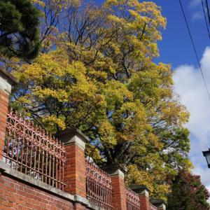 通りすがりの秋風景