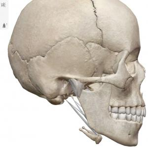 頭蓋骨から考える