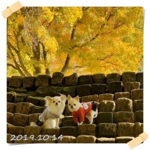 カムイコタン(神の住む場所)の紅葉♪
