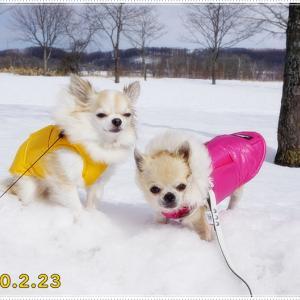 冬のキャンピングカーの旅・・・釧路管内を散策♪