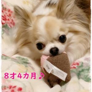 ファビは健康優良犬(^_-)-☆