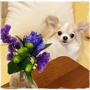 ルゥがきっかけで暮らしにお花が増えた♪お花の定期便ブルーミー