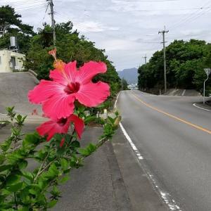 沖縄市 下品なぐらいダシのうまいラーメン屋