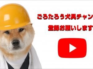 柴犬 しめじ・はに丸 黒柴 リキ 雛壇撮影来店〜