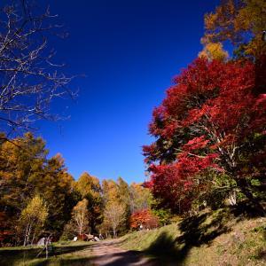秋色キャンプを楽しんできました。