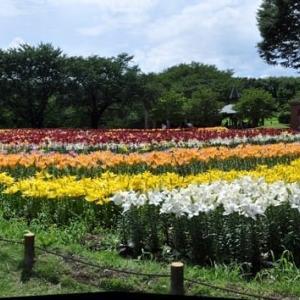 深谷パティオの ユリの大花壇