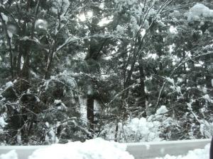 雪が降った。
