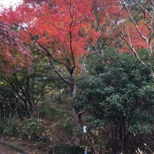 奥丹後と神戸紅葉めぐり