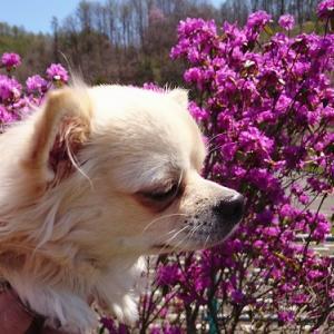 こどもの日はお花と一緒♪