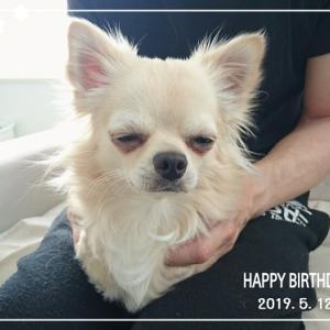 今日は愛犬の日・こむぎ1歳!BDドライブ♪