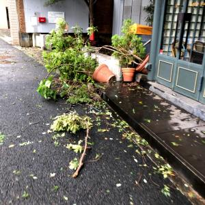 台風15号、通過直後の朝!