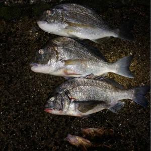 17日の釣り