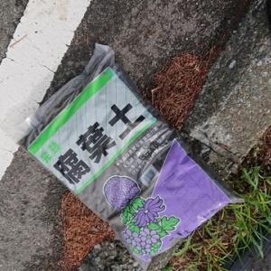 【環境ボランティア】~
