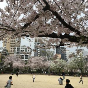 アミィの公園