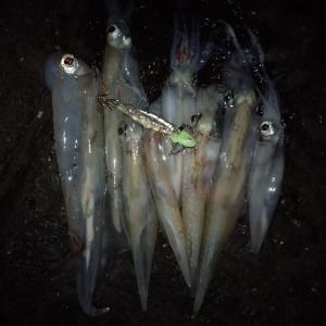 呼子イカ釣り2020-2月