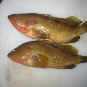 魚を捌く包丁(鋼)