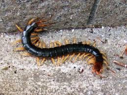 蜈蚣に尻を噛まれない夜の為に
