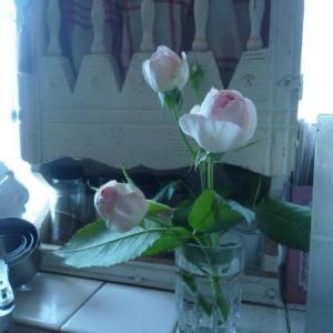 名残りのバラ