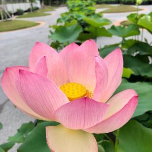お花センター