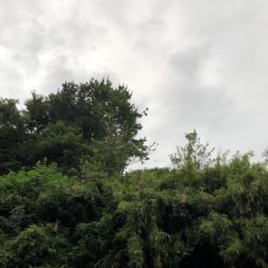 栗の木もバイバイ