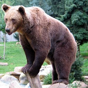 熊が塀から自宅に侵入しようとしたら・・・