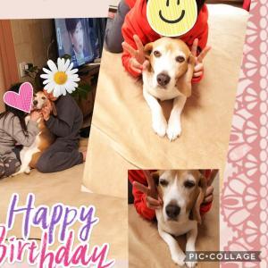 チロHappy Birthday