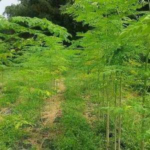 今、何故、モリンガで共生の森づくりか?